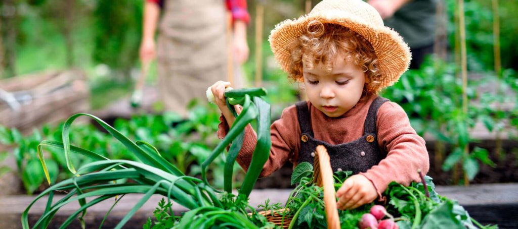 child planting in an allotment